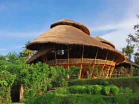 在巴厘島上不可思議的綠色學校、綠色王國