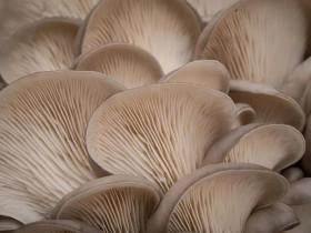 菌菇吃得好可以抗癌、降壓、調腸胃!